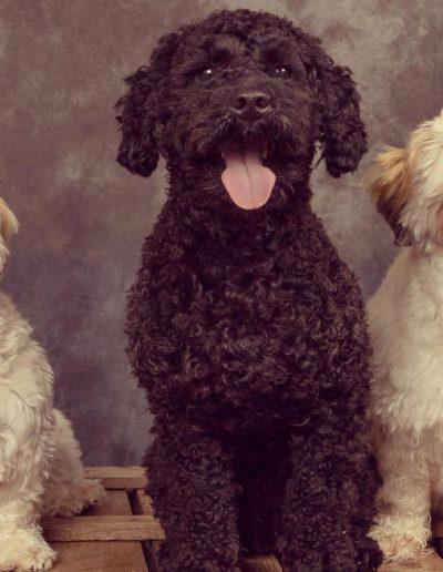 Seoras, Teddy and Bramble